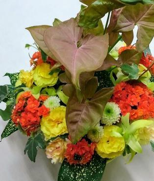 観葉植物とアレンジ…